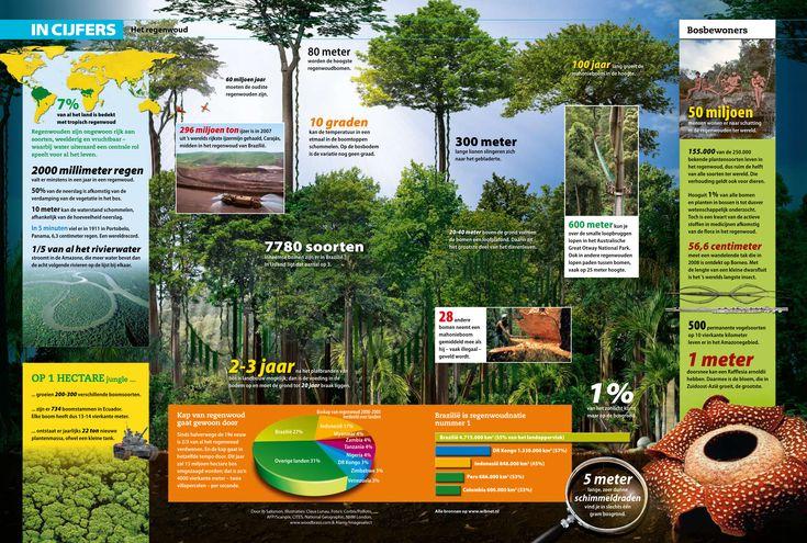 In cijfers - Het regenwoud