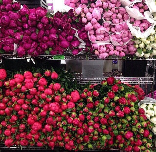 Նշանակություն և կիրառում  Գեղազարդիչ է և ներկատու։ Մշակության մեջ տարածված են քաջվարդի բազմաթիվ գեղազարդիչ սորտեր, որոնք ունեն խոշոր, լայն պսակաթերթիկներ (հիմնականում՝ բազմաթերթ)՝ ձյունասպիտակից մինչև վարդագույն, դարչնագույն, մուգ արնակարմիր, հաճելի բուրմունքով ծաղիկներ։ Բազմանում է թփիկների և կոճղարմատների բաժանումով, անդալիսով և սերմերով։ Գրանցված է ՀՀ Կարմիր գրքում։