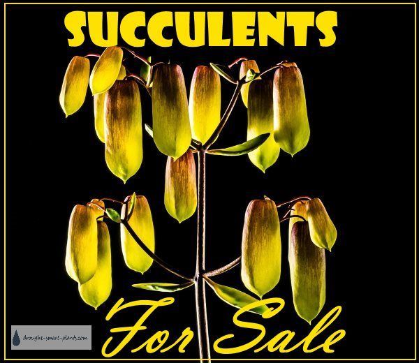 If you are looking for Succulents for Sale, buy them here...I dare you to resist...