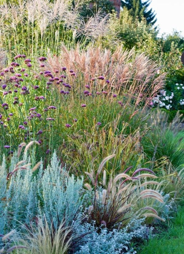 Mixing together different types of ornamental grasses always creates a visually terrific contrast in the landscape. This lovely border is a perfect example of that where decorative grasses of different colors, textures and shapes have been pleasantly combined for a long season of interest, extending to winter!