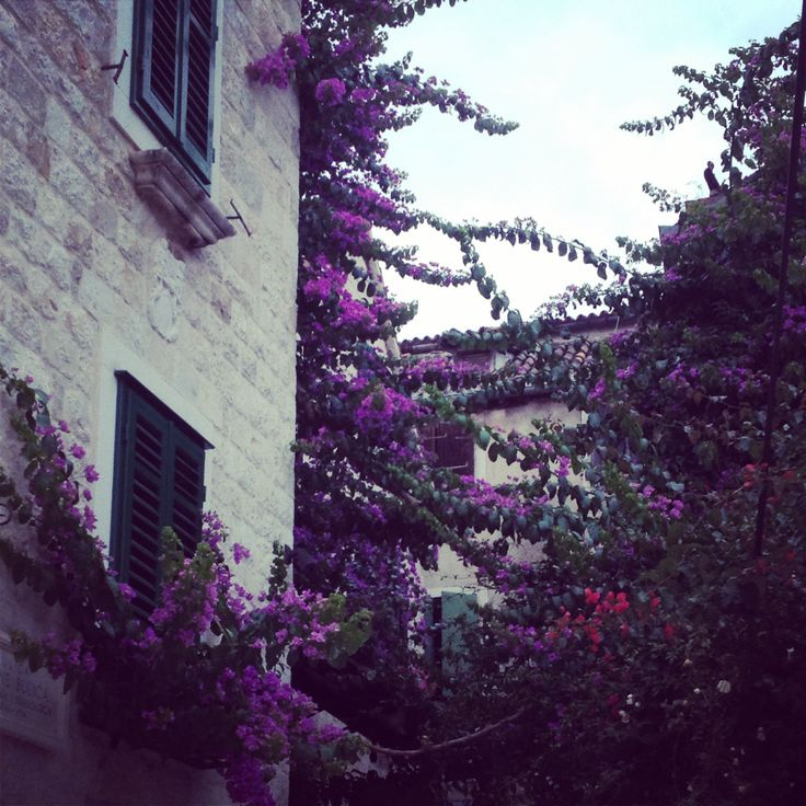Lovely lavender in Split, Croatia (pic by blp)