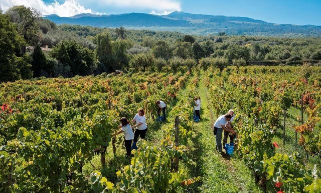 """""""La #Sicilia della #bellezza e del #vino. Un continente da condividere"""" è il nome dell'evento che si svolgerà il prossimo 12 maggio alle ore 10.00 presso le #Cantine #Donnafugata. L'incontro è promosso dall'Accademia dei #Georgofili. #marsala"""