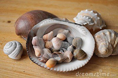 Beautiful background with colored shells