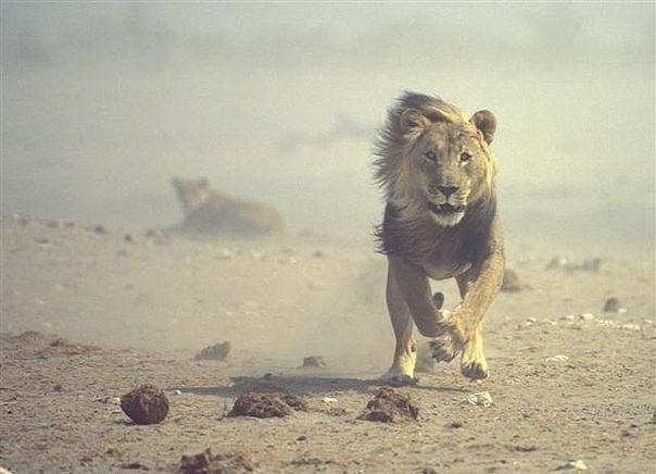 Каждое утро в Африке просыпается газель. Она должна бежать быстрее льва, иначе погибнет. Каждое утро в Африке просыпается и лев. Он должен бежать быстрее газели, иначе умрет от голода. Не важно кто ты — газель или лев. Когда встает солнце, надо бежать. #Лайф#Бизнес #коуч #IRINA #KANUNNIKOVA http://irina-kanunnikova.com