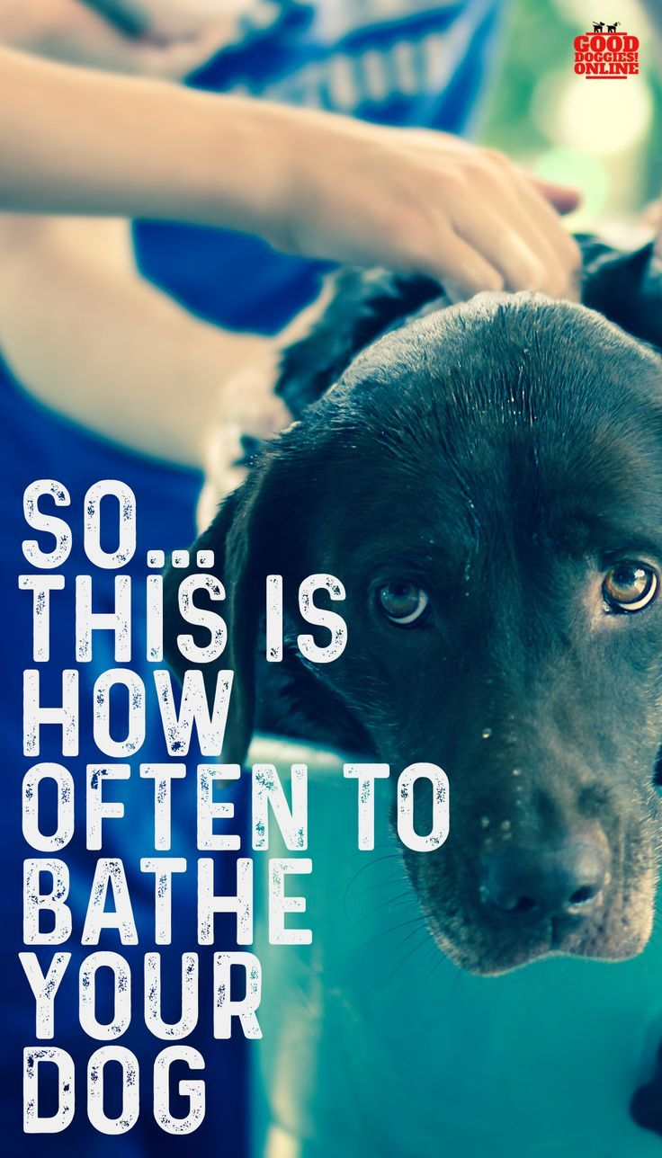 How Often To Bathe A Dog Bathe Dog Dog Care Puppy Training