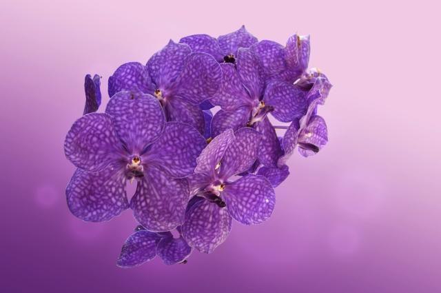'Being in Grace' Orchid Healing Essence Gisela Andersson Brisbane Australia  Read more: http://www.localsmile.com.au/Brisbane/Listing/IntoBeingGiselaAndersson/floweressencesorchidhealingaustralia/BeinginGraceOrchidHealingGiselaAnderssonBrisbaneFlowerEssences