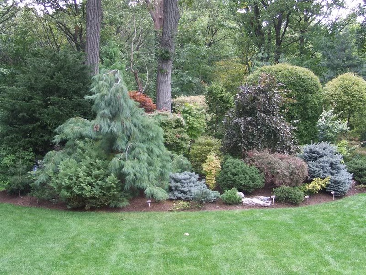 1066 best gardening with conifers evergreens images on pinterest plants christmas trees and - Evergreen landscaping ideas ...