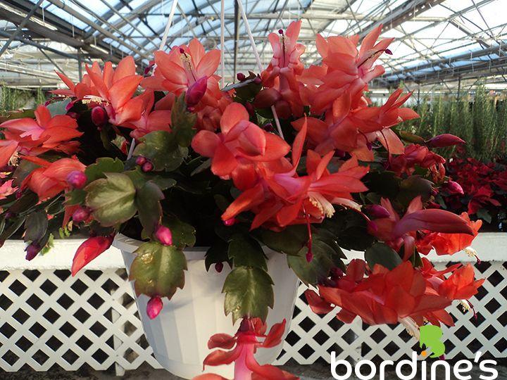 45 Best Indoor Flowering Plants Images On Pinterest