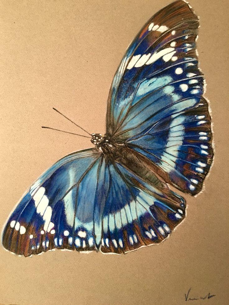 Blue Butterfly / Papillon bleu Pastel drawing 42 cm x 29.7 cm