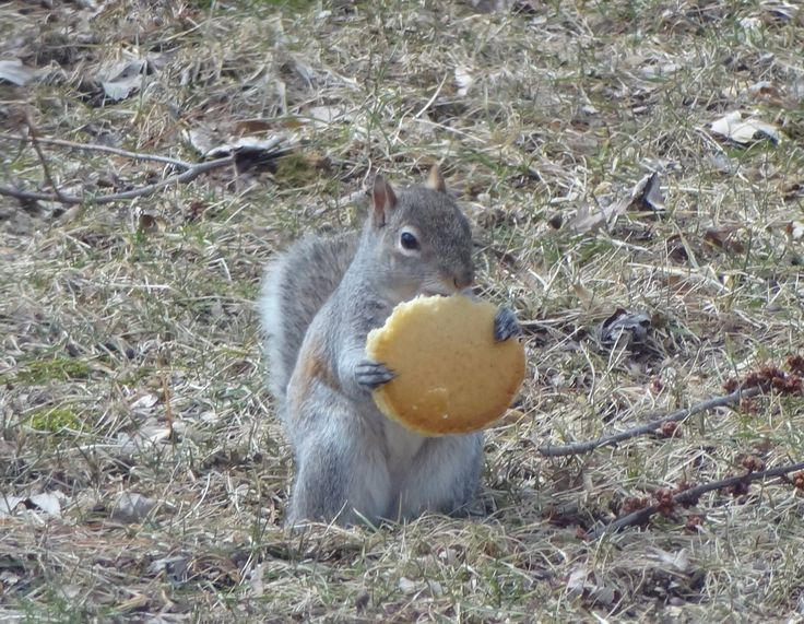 10 Pictures to Help You Celebrate #SquirrelAppreciationDay