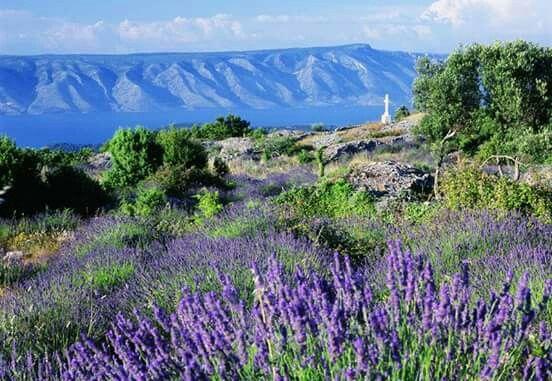 Nature on Jelsa Hvar Croatia