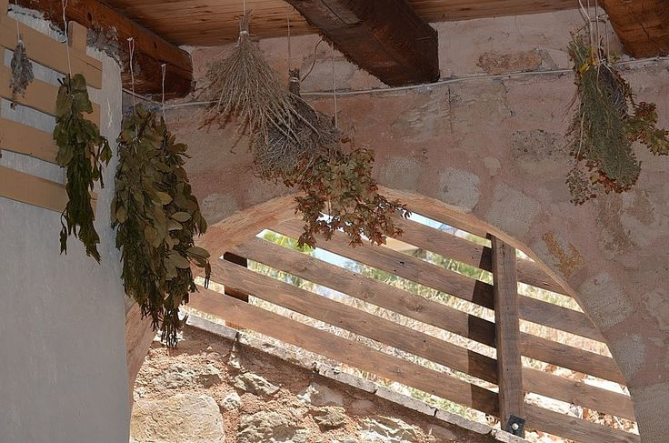 Drying the herbs in the shade, to use in our winter herbal infusions.