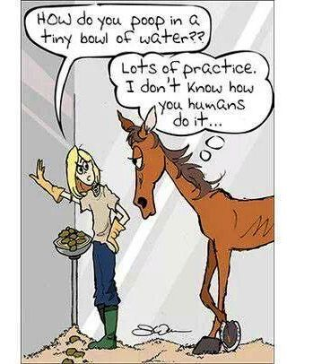 Pin by Cheyann on Horse | Horses, Funny horse pictures ...