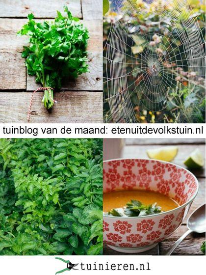 Tuinblog van de maand: Etenuitdevolkstuin.nl / Garden blog of the month - tuinieren.nl