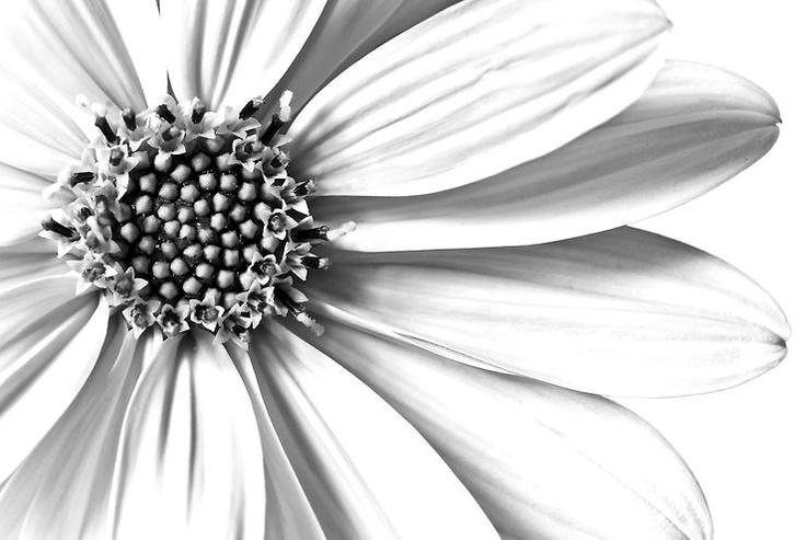 white daisy by chiara calanca @ http://adoroletuefoto.it