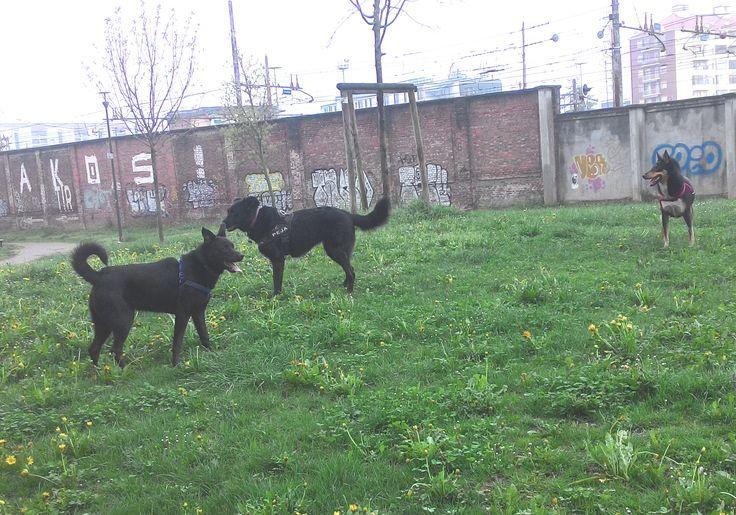 05/04/2016 - Torino con Max e Peja