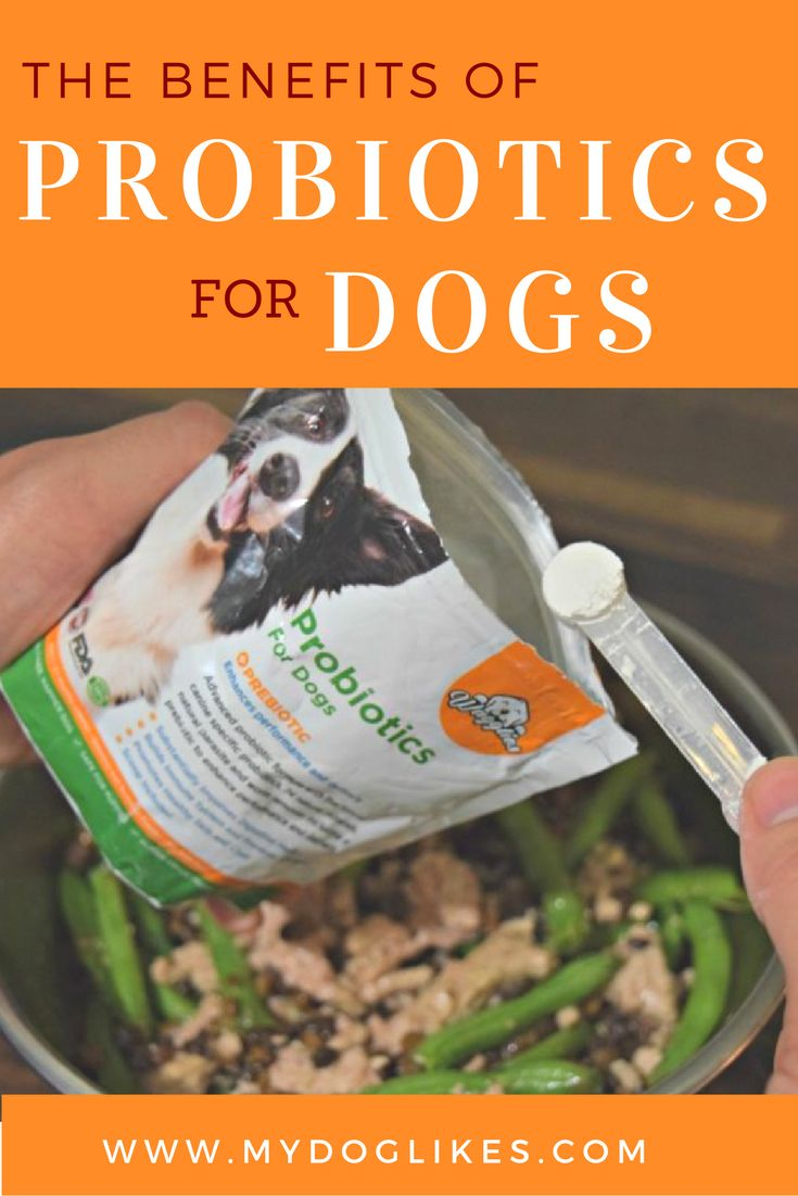 Does you dog have digestive issues like vomiting, gas or diarrhea? Read our Wagglies Probiotics review to learn more about the benefits of probiotics for dogs!