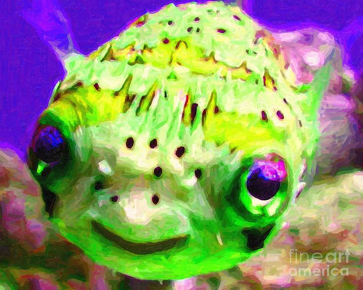 25 best puffer fish images on pinterest water animals for Puffer fish aquarium