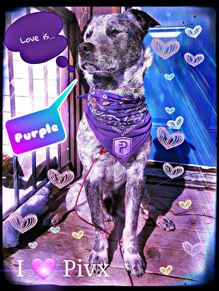 #ILovePIVX Submitted by Ange Gillespie  Love the #purple colours, Ange Gillespie!  #PIVX #ValentinesDay #contest #2018 #love