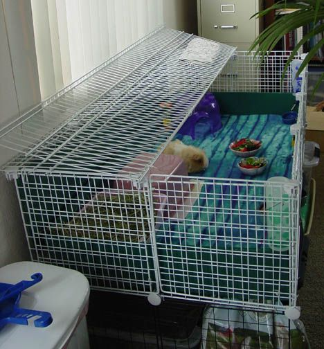 Baby Proofing your C&C cage - Guinea Pigs Australia