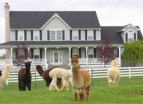 Llama farm!: Farms Houses, Dreams Houses, Nice Houses, Alpacas Farms, Front Yard, Farmhouse, Llamas Farms, Porches, September 2010
