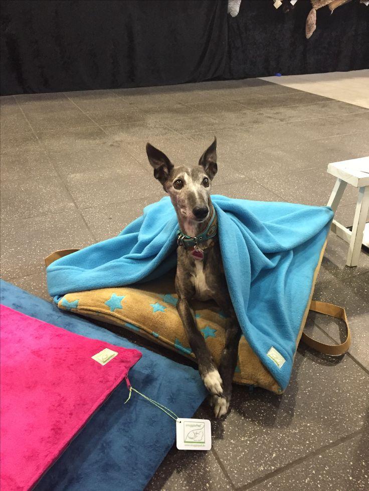 7 best hund images on Pinterest | Haustiere, Hunde und Hundeleine