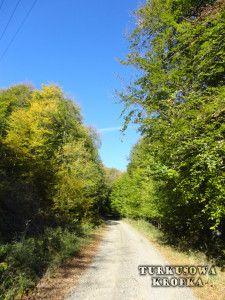Duna-Ipoly Nemzeti Park - piękne lasy w pobliżu Budapesztu - Turkusowa Kropka