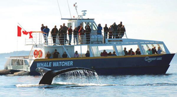 Whale-watching, Saint Andrews, New Brunswick Canada