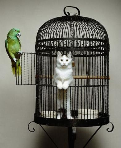 PetsLady's Pick: Funny Parrot Of The Day...see more at PetsLady.com -The FUN site for Animal Lovers