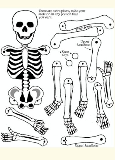 17 best ideas about skeleton craft on pinterest - Guirlande halloween a faire soi meme ...