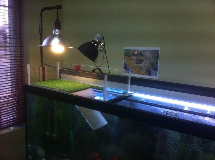 The Blog » DIY turtle dock Crafts