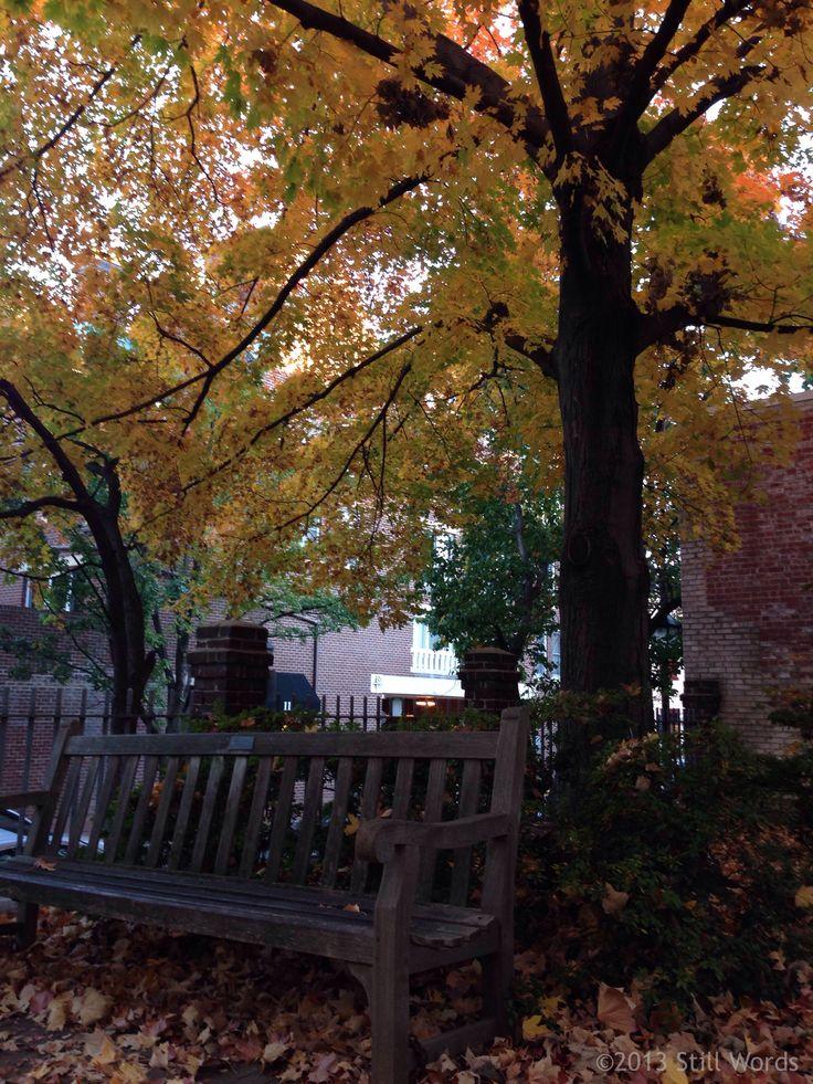 #Autumn in Old Town #Alexandria VA