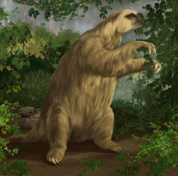 megalonyx jeffersons ground sloth i have a claw from this beast fossils in the flesh pinterest ground sloth sloth and prehistoric