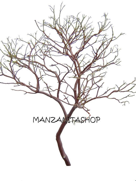 One Manzanita Centerpiece 28 to 30 Inches Tall by ...