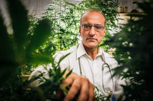 Des médecins sereins face à la marijuana...