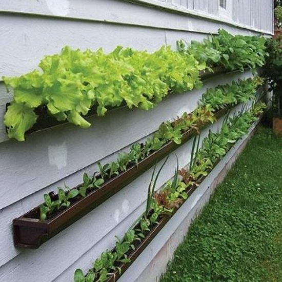 great use of old gutters into planters - great idea - thanks aunt fred!!!!!
