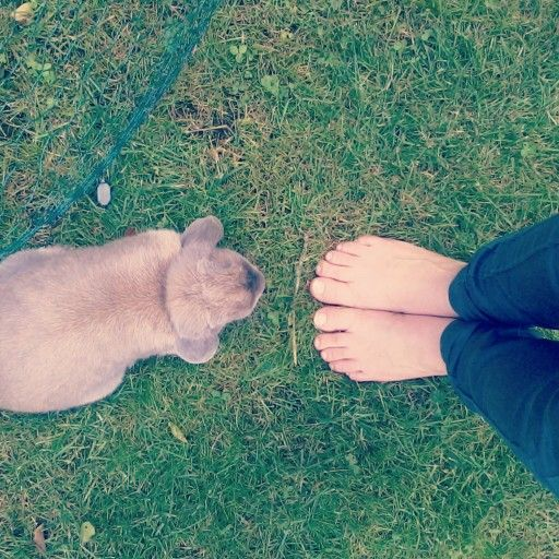The love between a bunny and a people can be as large