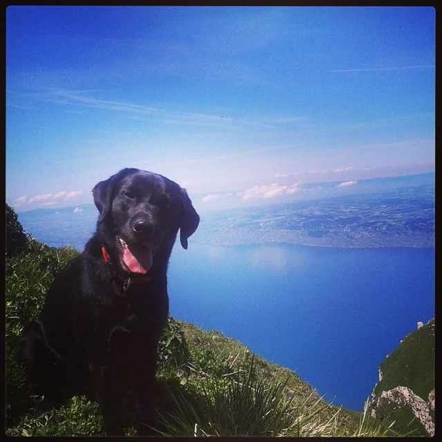 Happy dog in front of this beautiful region #montreuxriviera
