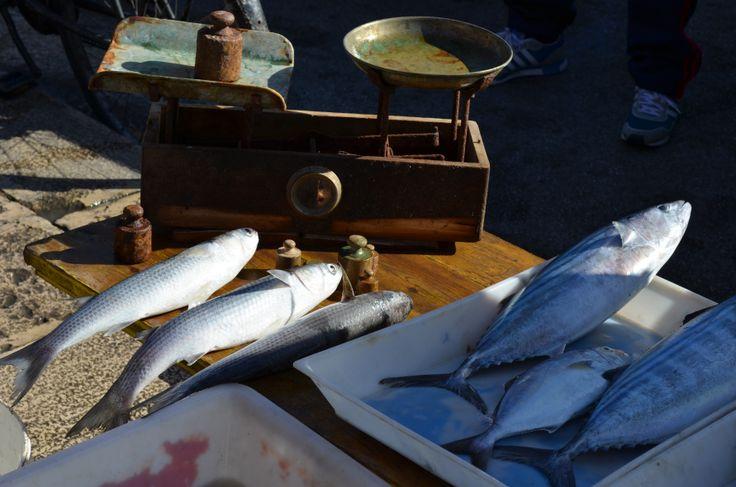 Fresh fish in Bari, Italy