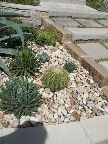 254 best images about cactus rock garden on pinterest for Landscaping rocks austin