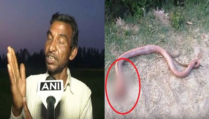 New Delhi: The bizarre news is coming from Uttar Pradesh state where a man hailing from Hardoi has shocked doctors. It is an unbelievable incidence that man bit snake 's head off and chewed it before spitting it out. Doctor Sanjay Kumar, who is treating the man, told all this to news agency ANI that he had never seen such a case in his life.   #ANI news #farmer bit snake #Hardoi #man bit snake #man bit snake in uttarpradesh #man bit snake's head #OMG: man bit snake to t