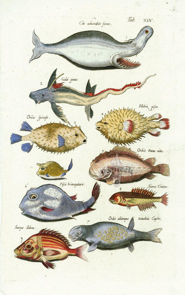Best 25 puffer fish art ideas on pinterest ocean animal for Puffer fish art