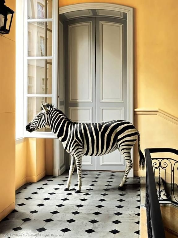 William Curtis Rolf - Deyrolle Zebra | 1stdibs.com