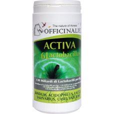 Activa 6L is een innoverend product om bacteriën the helpen re-balanceren in de darm flora en bestrijd gevaarlijke bacteriën dmv een nieuwe mix van melkzuur fermenten. Fructo-oligosacchariden voegen de nodige en de juiste nutriënten toe voor optimale efficiëntie van melkzuur fermenten (probiotische elementen). Dit product is rijk aan vitaminen die een fundamentele rol spelen voor het welzijn van het paard. Het wordt geadviseerd bij: