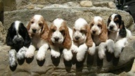 6 beautiful puppies!