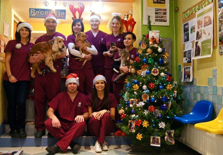 Święta Bożegonarodzenia u nas w klinice:)  Weterynaria #christmas #holiday #tree #crew #team #vet #clinic #dog #cat