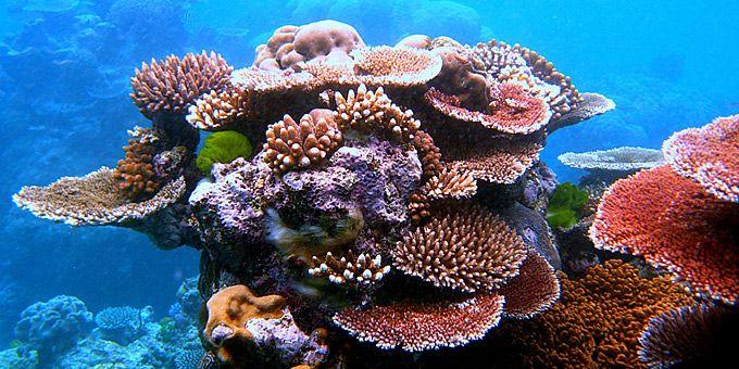 Ένας κοραλλιογενής ύφαλος διδάσκει... ζωγραφική σύνθεση - Φωτογραφική μαγεία από τους βυθούς των ωκεανών