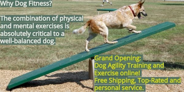 Grand Opening Of Agility Training And Exercise Products Online