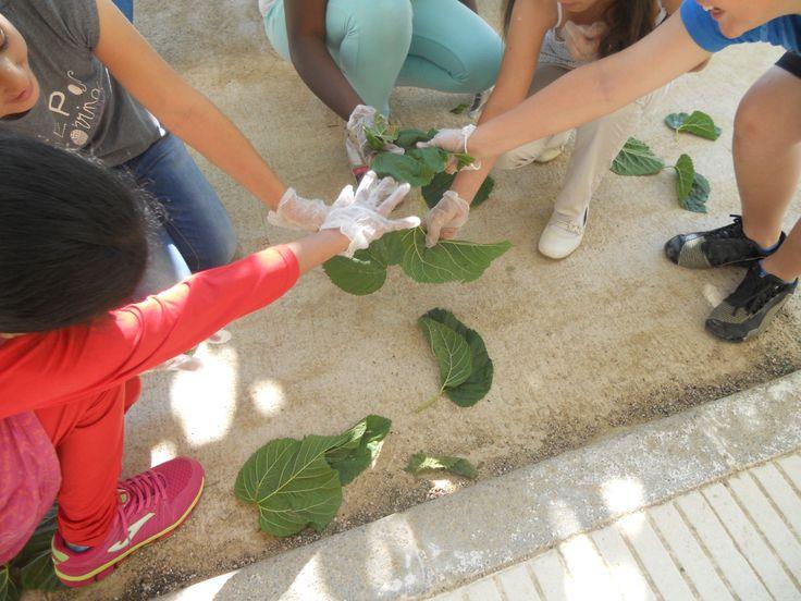 PETITS GRANS GESTOS A L'ESCOLA EL TEMPLE  La neteja de l'hort escolar la va fer l'alumnat de cicle superior, on van netejar les males herbes i algunes plantes que estaven fetes malbé