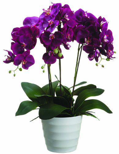 Silk Décor Phalaenopsis Plant Floral Arrangements, 28-Inch Silk Décor